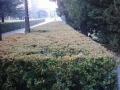 città-del-vaticano-giardini-04